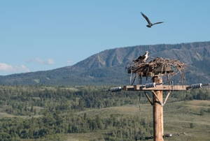 bird-watching-yellowstone