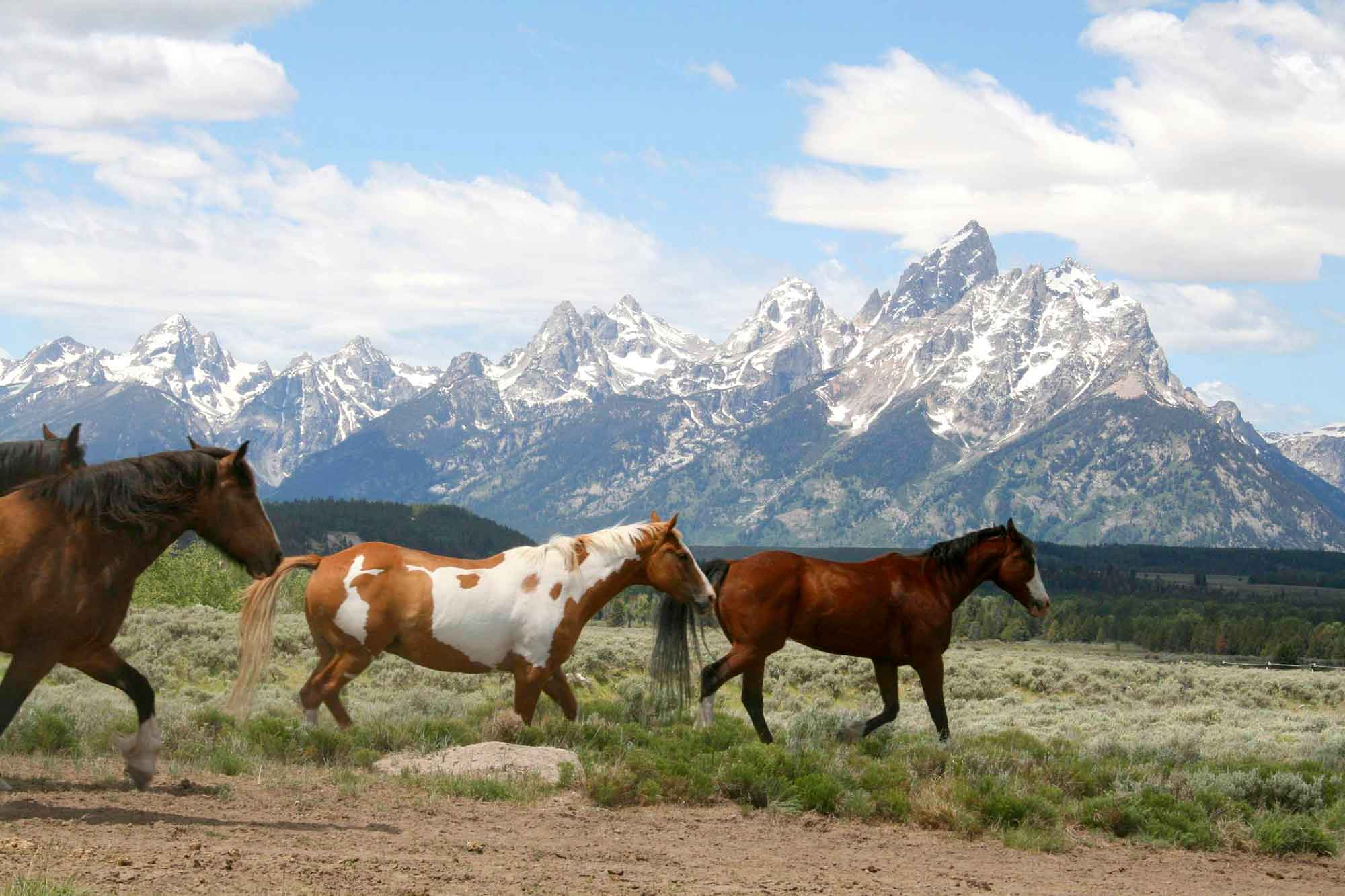 Horses-Riding-Through-The-Tetons