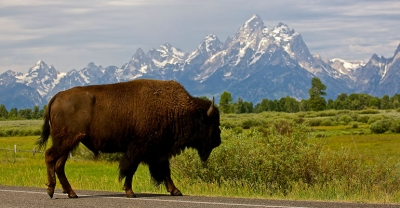 National-Parks-101-How-to-be-a-Great-Visitor