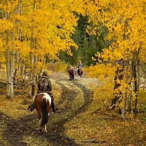 Turpin Meadow Ranch Horseback Riding Autumn Colors